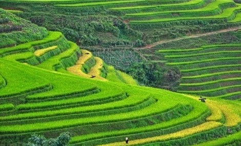 Sapa, Ninh Binh named in Asia's up-and-coming destinations by TripstoDiscover