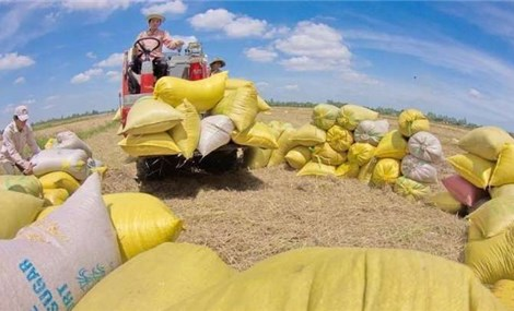 Agricultural import - export revenue reaches nearly US$39.5 billion in seven months