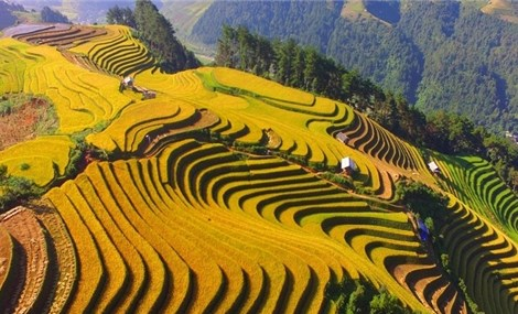 Festival exploring Mu Cang Chai terraced fields slated for August 29-October 18