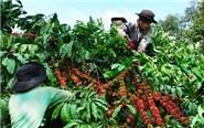 越南与印尼加强咖啡产业的合作