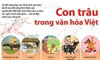 Con trâu trong văn hóa Việt