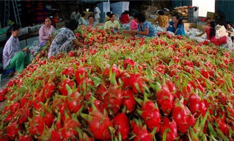 Xuất khẩu rau quả tăng mạnh ở nhiều thị trường khó tính