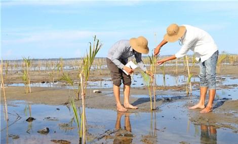 Hỗ trợ phát triển rừng ngập mặn