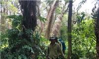 Chuyện giữ rừng U Minh