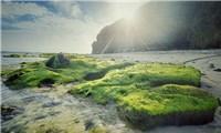 Lý Sơn mùa rêu phủ xanh mát