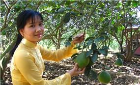 Vườn – làng bưởi Tân Triều