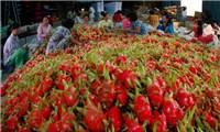 Xuất khẩu rau quả tăng hơn 12% trong 4 tháng đầu năm