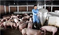 Nhiều đối tượng được hỗ trợ miễn thu phí chăn nuôi theo Thông tư 24/2021/TT-BTC
