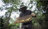 Sinh kế hàng chục nghìn người bị thiệt hại nếu mật ong Việt Nam bị Mỹáp thuế chống phá giá
