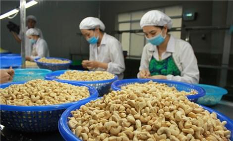 Vietnam's cashew industry dominates the Turkish market