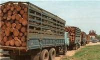 Gỗ Campuchia xuất sang Việt Nam cần bằng chứng hợp pháp