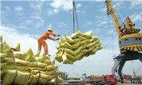 Rice exports set to see bright prospects in coming months