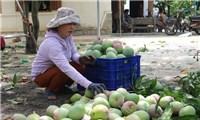 Thúc đẩy chuyển đổi số để đưa nông sản Việt ra thế giới
