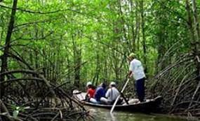 Thông điệp từ rừng ngập mặn Đồng bằng sông Cửu Long