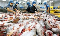 America's frozen pangasius over, opportunity for Vietnam's seafood exports to the US