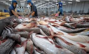 Lượng cá tra tồn kho của Mỹ đã hết, cơ hội cho thủy sản Việt Nam