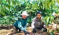 Doanh nghiệp có thể'đặt hàng' vùng nguyên liệu nông sản