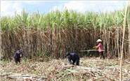 Vietnam imposes anti-dumping and anti-subsidy tax on Thai sugar