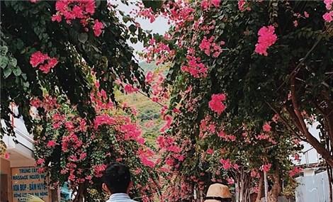 Quên lối về với những con đường hoa giấy ở Nha Trang đang vào mùa bung nở