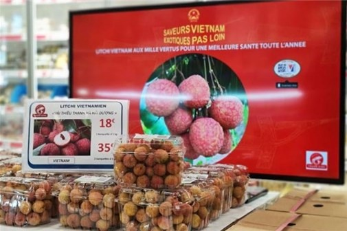 Vietnamese lychee sold in France for more than 500,000 VND per kilogram