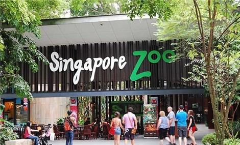 Sở thú Singapore, nơi bạn có thể hòa mình vào thế giới hoang dã ở quốc đảo sư tử