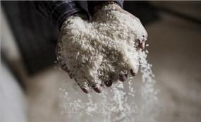 Xuất khẩu gạo của Campuchia giảm 29%