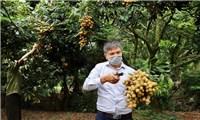 Sau vải thiều, nhãn Việt Nam sẽ được bán online tới 21 quốc gia, vùng lãnh thổ