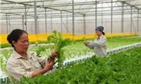 Chuyển đổi số - đột phá tạo nền tảng cho nông nghiệp mới