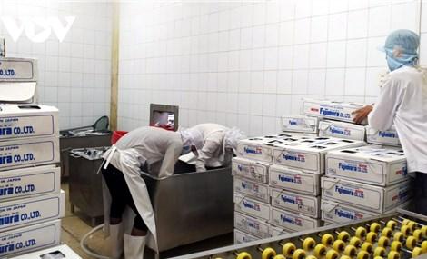 Chi phí logistics tăng vọt, doanh nghiệp xuất khẩu thủy sản lo thua lỗ