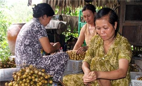 Kết nối tiêu thụ nhãn và sản phẩm OCOP tỉnh Đồng Tháp, Sóc Trăng tại Hà Nội