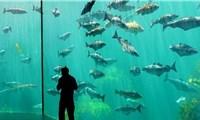 Khám phá 10 thủy cung lớn nhất thế giới