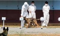 Campuchia huấn luyện thành công chó phát hiện người mắc COVID-19
