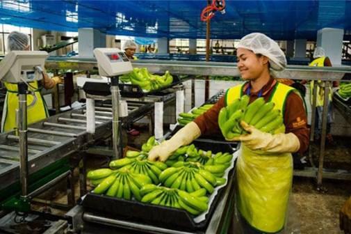 Campuchia xuất khẩu nông sản tăng 87%, riêng gạo giảm