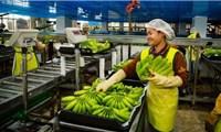 Campuchia xuất khẩu nông sản tăng 87%