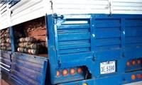 Xe tải ngụy trang bí đỏ để chở gỗ lậu qua biên giới Campuchia