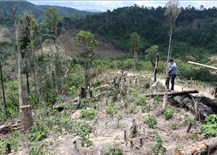Điều tra'điểm nóng' phá rừng Ea Rớt