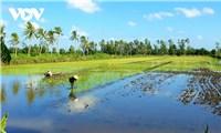 """Sử dụng thuốc bảo vệ thực vật""""quá đà"""" gâyô nhiễm đất, nước, mất an toàn thực phẩm"""