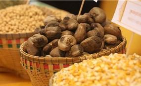 Nông sản Campuchia ồ ạt sang Việt Nam