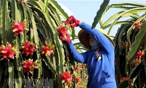 Thúc đẩy xuất khẩu hàng nông sản sang thị trường Trung Quốc