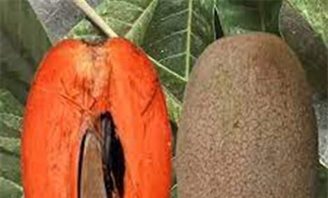 Kinh ngạc với giống hồng xiêm ruột đỏ, quả nặng hơn 2 kg