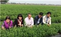 Giáo sư'khai sinh' cây cỏ ngọt ở Việt Nam