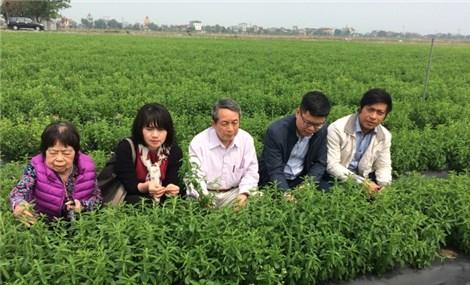Giáo sư 'khai sinh' cây cỏ ngọt ở Việt Nam