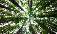 """Người Nhật và văn hóa""""tắm rừng"""" Shinrin-yoku"""