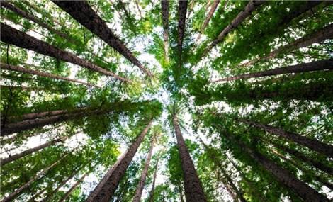 """Người Nhật và văn hóa """"tắm rừng"""" Shinrin-yoku"""
