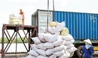 Giá gạo Việt xuất khẩu vượt Thái Lan
