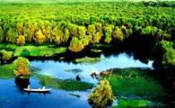 Về An Giang khám phá rừng Tràm Trà Sư