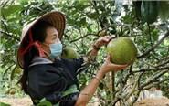 Mô hình làm làm kinh tế giỏi của phụ nữ Lai Châu