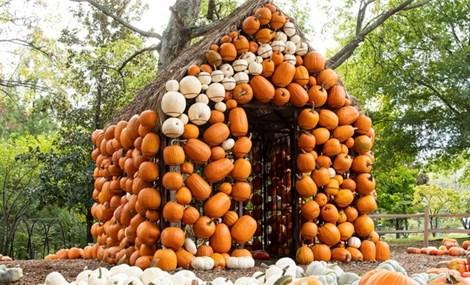 9 điểm đến 'săn' bí ngô Halloween hàng đầu ở Mỹ