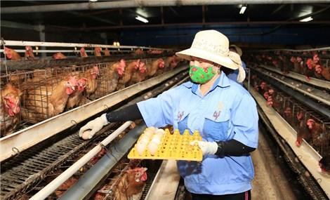 Ngành Nông nghiệp Hà Nội: Kết nối thị trường để thúc đẩy tăng trưởng