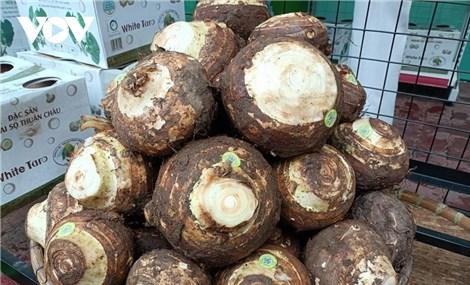 Đặc  sản Khoai sọ Thuận Châu sản xuất theo chuỗi có đầu ra ổn định